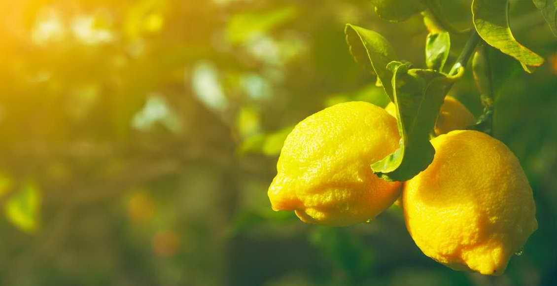 Huile Essentielle de Citron : le soleil dans un flacon !